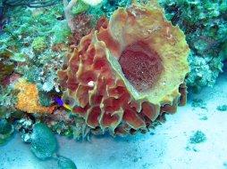 sea_sponge